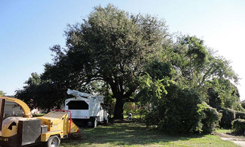 all-season-tree-services-new-orleans