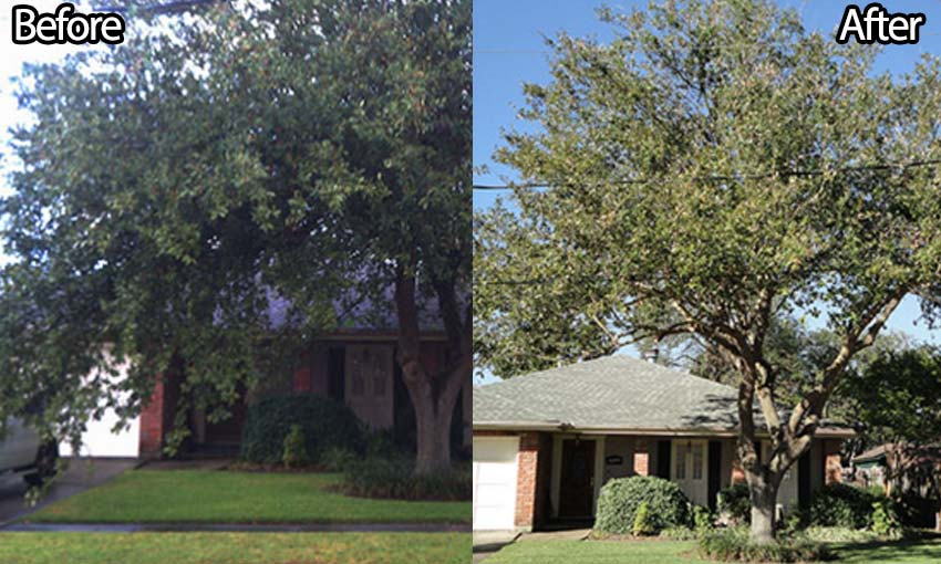 all-season-tree-services-tree-pruning