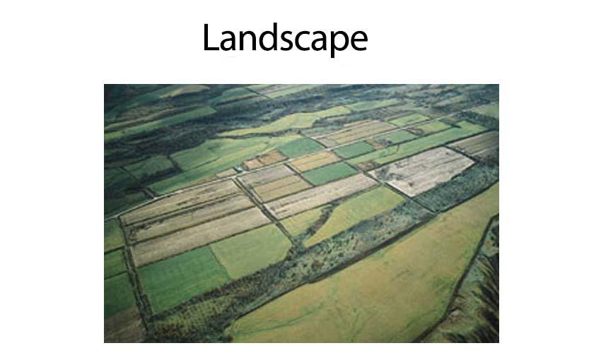 gilbert-landscape